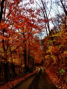 fall leaves country roads